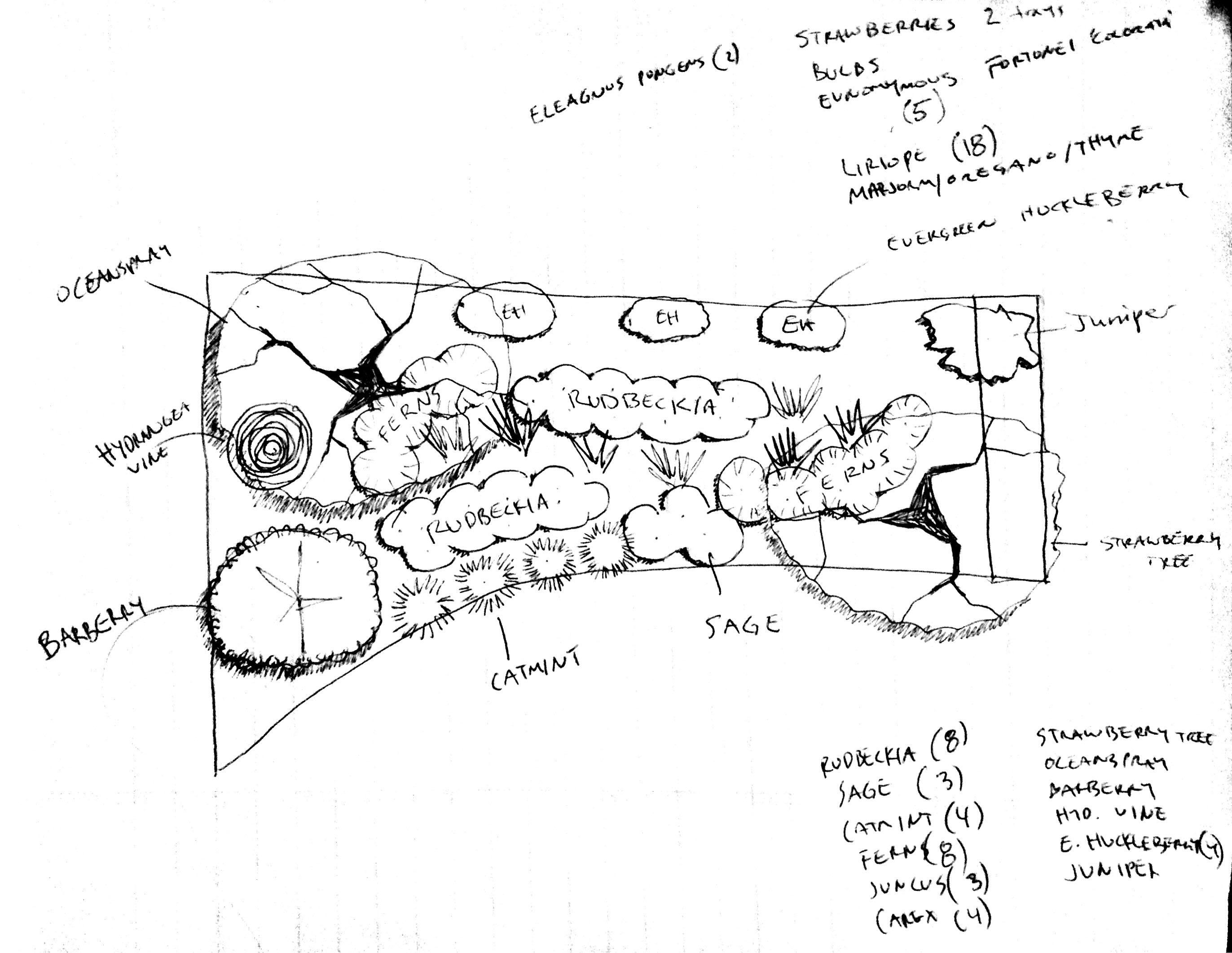 Rain Garden Design Garden ideas and garden design
