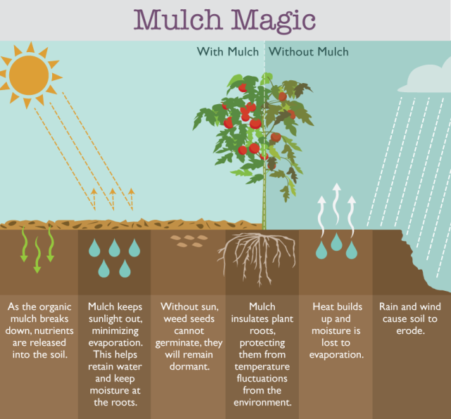 mulch-magic (1)