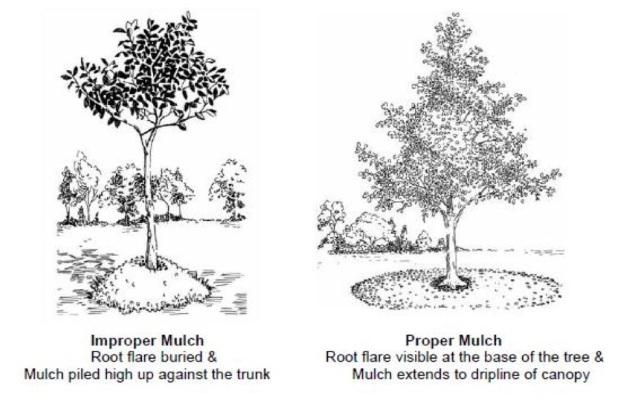 proper-mulching-diagram-