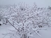 d2d5f94145e2cd9d51e582163aae0f33--blueberry-bushes-blog-images