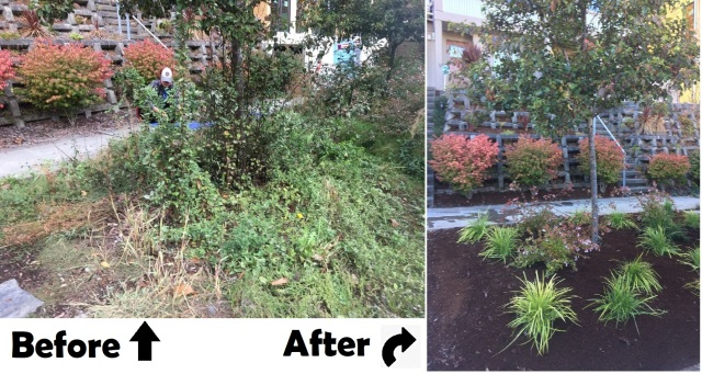 before after garden cleanup