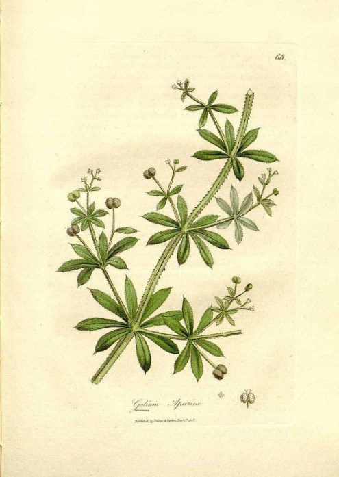 Cleavers-PD